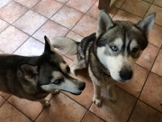 Eli and his sister Luna waiting for a treat