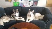 duo on couch