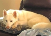 Silas on couch